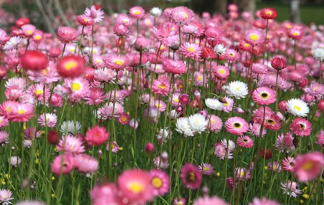 Chọn hạt giống trồng hoa để không khí Xuân ngập tràn cả nhà - Ảnh 6.