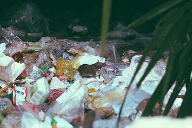 Cuộc sống ngập ngụa mùi rác bên cạnh con rạch ô nhiễm nhất Sài Gòn - Ảnh 11.