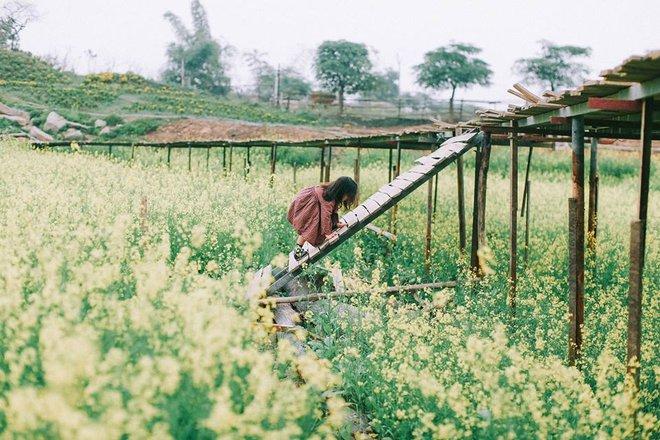 Bộ ba bạn thân Mầm - Mũm - Mon xuất hiện siêu yêu trong bộ ảnh chụp trên cánh đồng hoa cải - Ảnh 28.