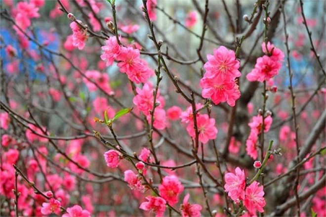 Cứ dịp Tết đến mọi người lại đi mua 10 loại hoa này để trang trí nhà cầu may - Ảnh 2.