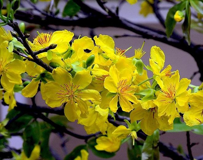 Cứ dịp Tết đến mọi người lại đi mua 10 loại hoa này để trang trí nhà cầu may - Ảnh 3.