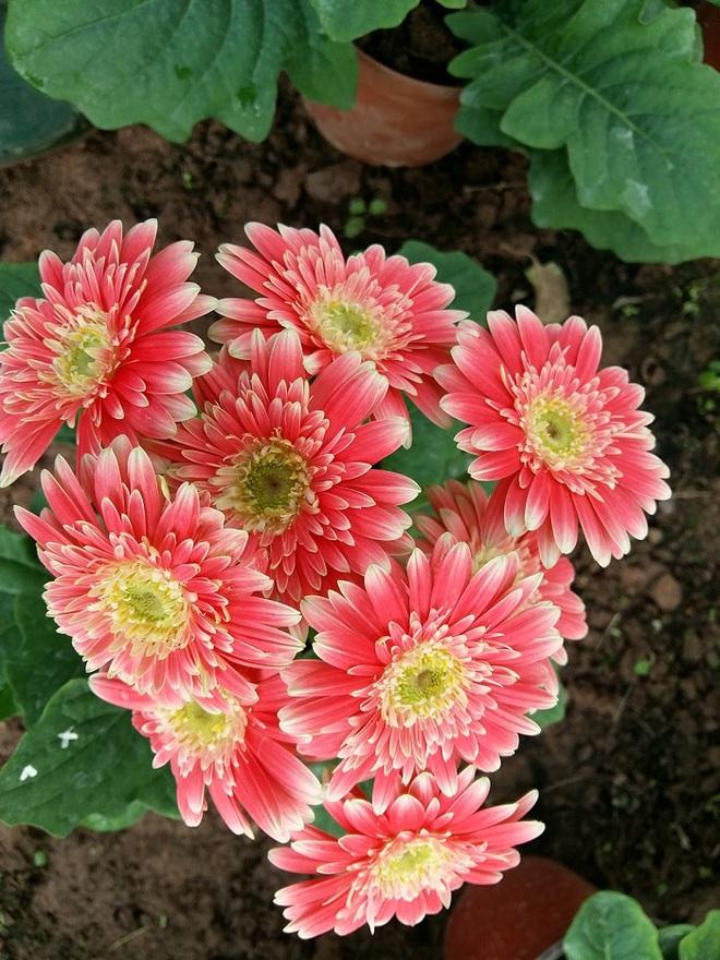 Cứ dịp Tết đến mọi người lại đi mua 10 loại hoa này để trang trí nhà cầu may - Ảnh 6.