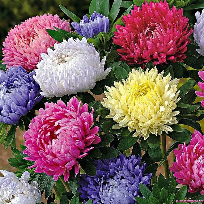 Cứ dịp Tết đến mọi người lại đi mua 10 loại hoa này để trang trí nhà cầu may - Ảnh 7.