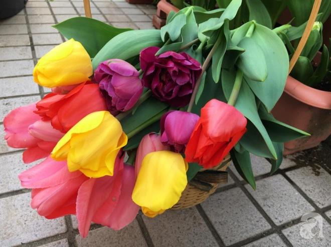 Nàng dâu Việt ở Nhật chỉ cách trồng tulip từ đất để hoa nở rực rỡ đón Tết - Ảnh 2.