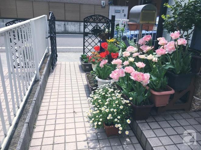 Nàng dâu Việt ở Nhật chỉ cách trồng tulip từ đất để hoa nở rực rỡ đón Tết - Ảnh 4.