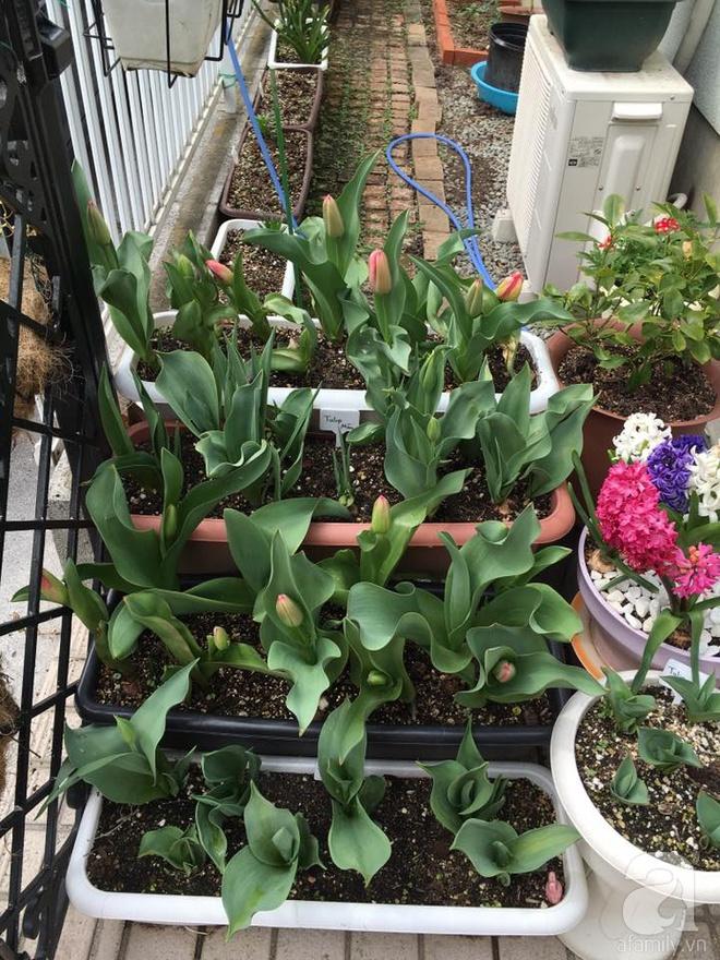 Nàng dâu Việt ở Nhật chỉ cách trồng tulip từ đất để hoa nở rực rỡ đón Tết - Ảnh 10.