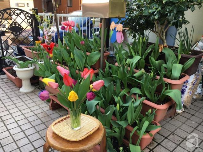 Nàng dâu Việt ở Nhật chỉ cách trồng tulip từ đất để hoa nở rực rỡ đón Tết - Ảnh 11.