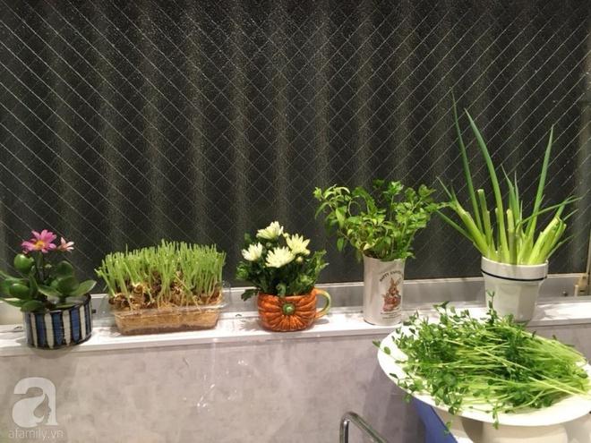 Ngắm vườn rau gia vị độc đáo trồng trong lọ và cốc thủy tinh của mẹ Việt hai con ở Nhật - Ảnh 2.