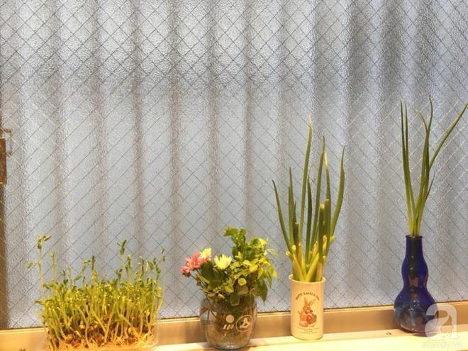 Ngắm vườn rau gia vị độc đáo trồng trong lọ và cốc thủy tinh của mẹ Việt hai con ở Nhật - Ảnh 3.