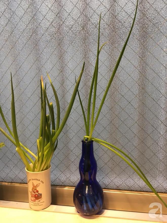 Ngắm vườn rau gia vị độc đáo trồng trong lọ và cốc thủy tinh của mẹ Việt hai con ở Nhật - Ảnh 5.