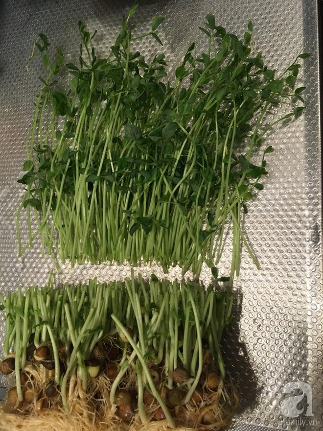 Ngắm vườn rau gia vị độc đáo trồng trong lọ và cốc thủy tinh của mẹ Việt hai con ở Nhật - Ảnh 15.