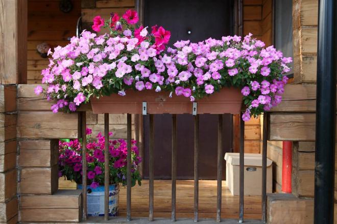 Ban công tràn ngập sắc hè nhờ trang trí với hoa tươi siêu ấn tượng - Ảnh 7.