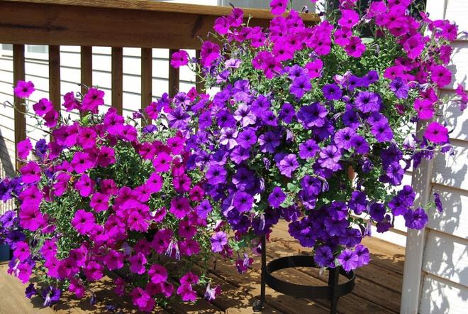 Ban công tràn ngập sắc hè nhờ trang trí với hoa tươi siêu ấn tượng - Ảnh 8.