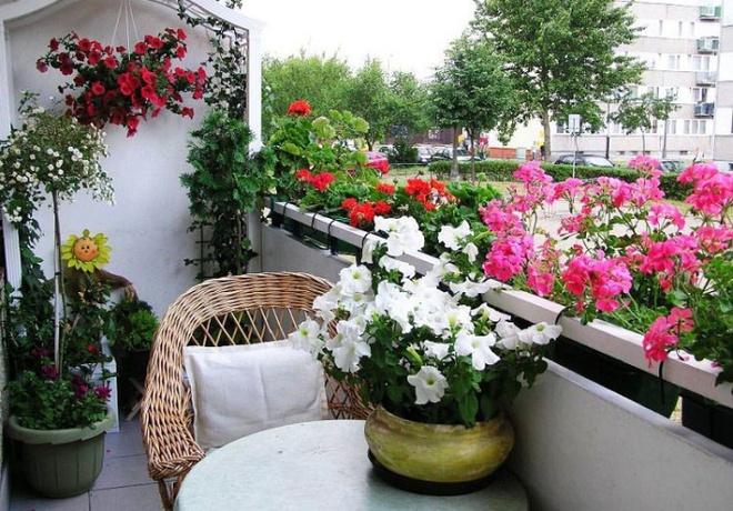 Ban công tràn ngập sắc hè nhờ trang trí với hoa tươi siêu ấn tượng - Ảnh 10.