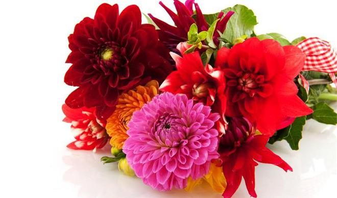 Bạn có thể tự tin mua bất kỳ loài hoa nào dịp Tết khi biết 4 cách chăm sóc hoa đơn giản này - Ảnh 9.
