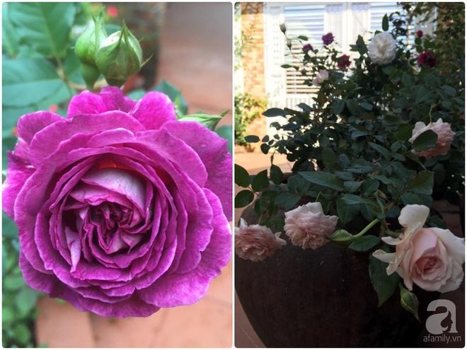 Mùng 1 Tết ghé thăm khu vườn hồng rực rỡ trồng trong chum vại độc đáo ở miền Trung - Ảnh 7.