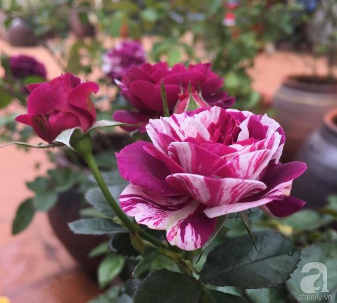 Mùng 1 Tết ghé thăm khu vườn hồng rực rỡ trồng trong chum vại độc đáo ở miền Trung - Ảnh 10.
