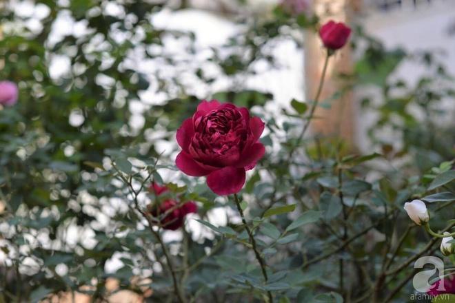 Mùng 1 Tết ghé thăm khu vườn hồng rực rỡ trồng trong chum vại độc đáo ở miền Trung - Ảnh 12.