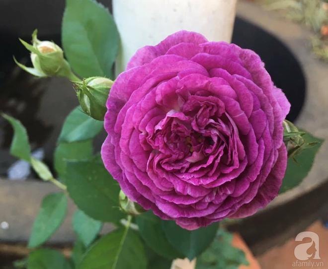 Mùng 1 Tết ghé thăm khu vườn hồng rực rỡ trồng trong chum vại độc đáo ở miền Trung - Ảnh 17.