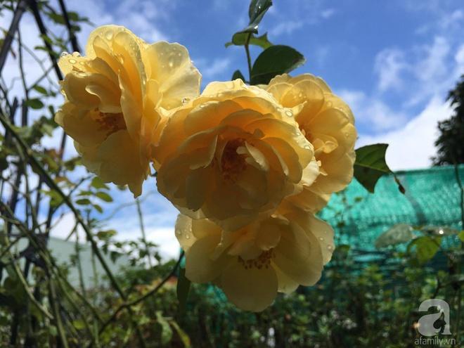 Mùng 1 Tết ghé thăm khu vườn hồng rực rỡ trồng trong chum vại độc đáo ở miền Trung - Ảnh 21.