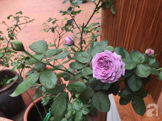 Mùng 1 Tết ghé thăm khu vườn hồng rực rỡ trồng trong chum vại độc đáo ở miền Trung - Ảnh 24.