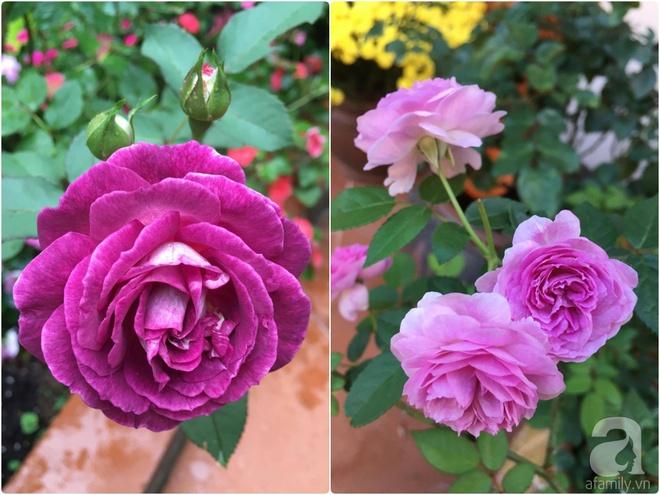 Mùng 1 Tết ghé thăm khu vườn hồng rực rỡ trồng trong chum vại độc đáo ở miền Trung - Ảnh 30.
