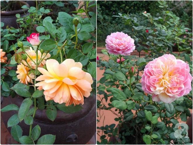Mùng 1 Tết ghé thăm khu vườn hồng rực rỡ trồng trong chum vại độc đáo ở miền Trung - Ảnh 32.