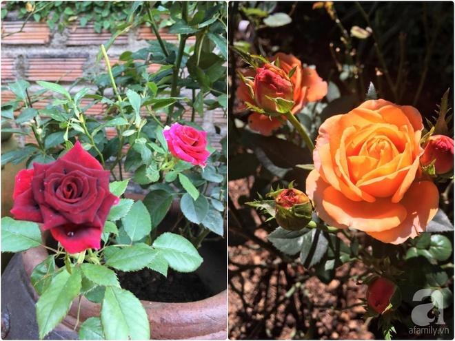 Mùng 1 Tết ghé thăm khu vườn hồng rực rỡ trồng trong chum vại độc đáo ở miền Trung - Ảnh 34.