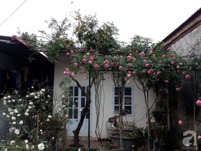 Ngôi nhà hoa hồng đẹp như thơ ở Hưng Yên của ông bố đơn thân quyết phá sân bê tông để thực hiện ước mơ - Ảnh 2.