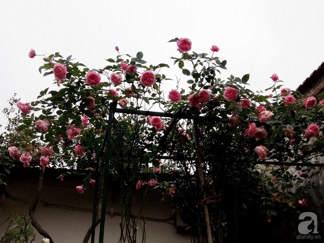 Ngôi nhà hoa hồng đẹp như thơ ở Hưng Yên của ông bố đơn thân quyết phá sân bê tông để thực hiện ước mơ - Ảnh 3.