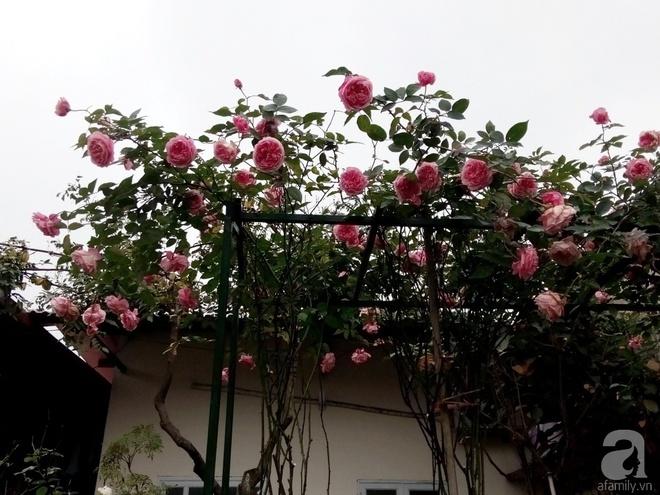 Ngôi nhà hoa hồng đẹp như thơ ở Hưng Yên của ông bố đơn thân quyết phá sân bê tông để thực hiện ước mơ - Ảnh 5.