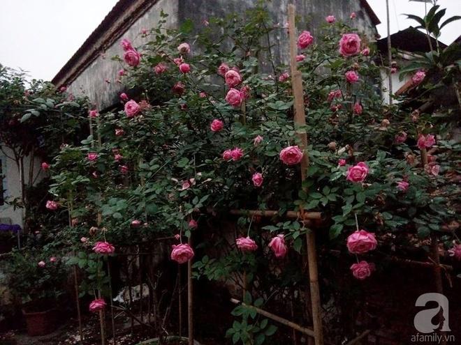 Ngôi nhà hoa hồng đẹp như thơ ở Hưng Yên của ông bố đơn thân quyết phá sân bê tông để thực hiện ước mơ - Ảnh 6.