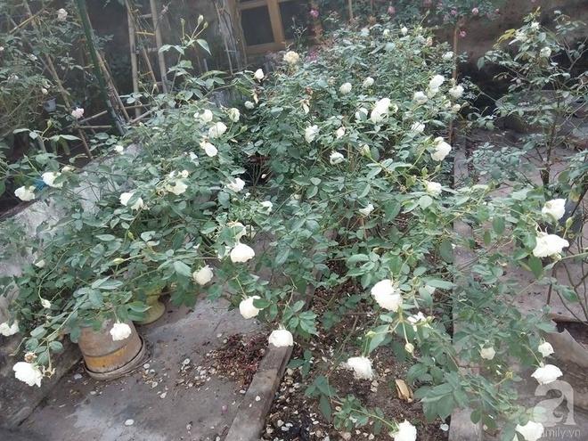 Ngôi nhà hoa hồng đẹp như thơ ở Hưng Yên của ông bố đơn thân quyết phá sân bê tông để thực hiện ước mơ - Ảnh 13.