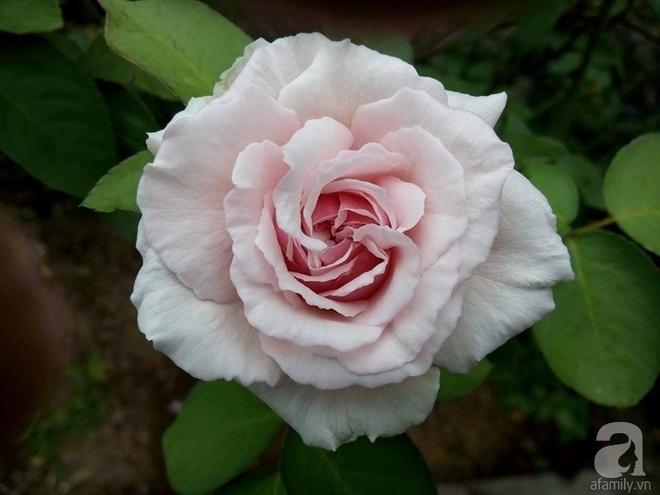 Ngôi nhà hoa hồng đẹp như thơ ở Hưng Yên của ông bố đơn thân quyết phá sân bê tông để thực hiện ước mơ - Ảnh 14.