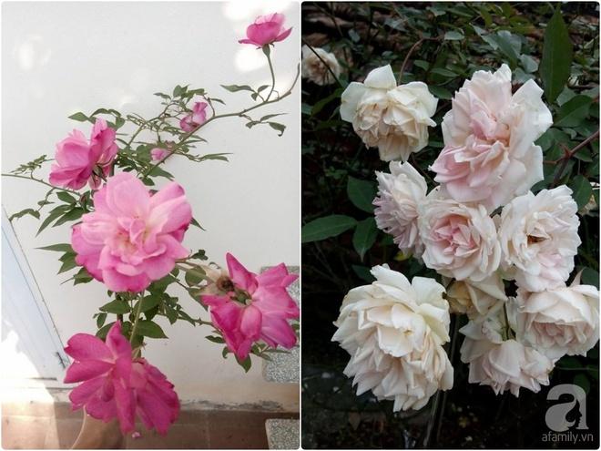Ngôi nhà hoa hồng đẹp như thơ ở Hưng Yên của ông bố đơn thân quyết phá sân bê tông để thực hiện ước mơ - Ảnh 16.