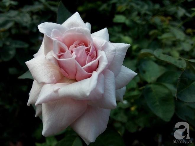 Ngôi nhà hoa hồng đẹp như thơ ở Hưng Yên của ông bố đơn thân quyết phá sân bê tông để thực hiện ước mơ - Ảnh 17.