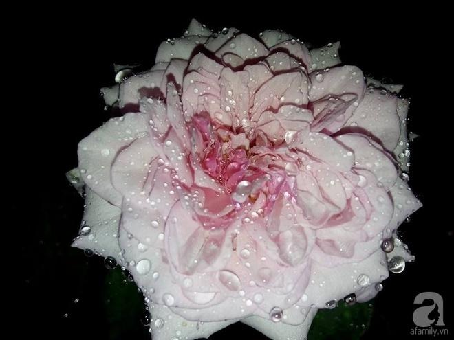Ngôi nhà hoa hồng đẹp như thơ ở Hưng Yên của ông bố đơn thân quyết phá sân bê tông để thực hiện ước mơ - Ảnh 21.
