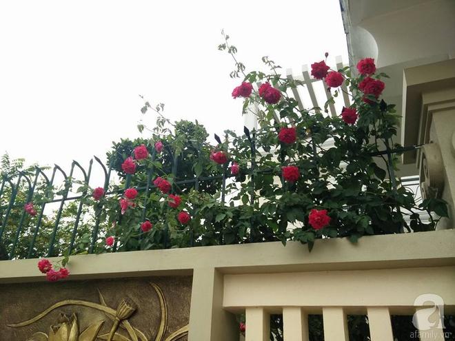 Đến thăm khu vườn hồng rực rỡ của người phụ nữ yêu hoa đất Hải Dương - Ảnh 3.