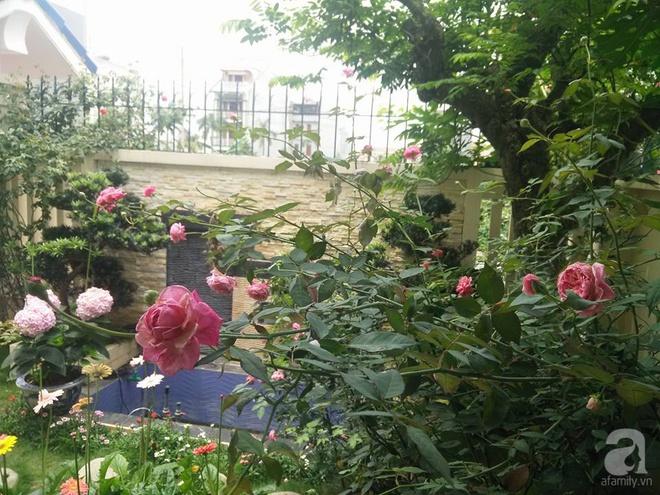 Đến thăm khu vườn hồng rực rỡ của người phụ nữ yêu hoa đất Hải Dương - Ảnh 5.