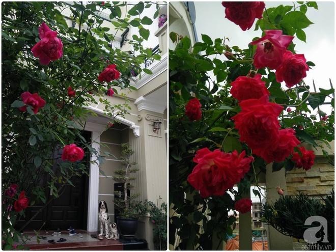 Đến thăm khu vườn hồng rực rỡ của người phụ nữ yêu hoa đất Hải Dương - Ảnh 8.