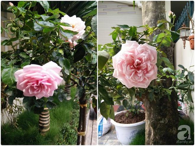 Đến thăm khu vườn hồng rực rỡ của người phụ nữ yêu hoa đất Hải Dương - Ảnh 9.
