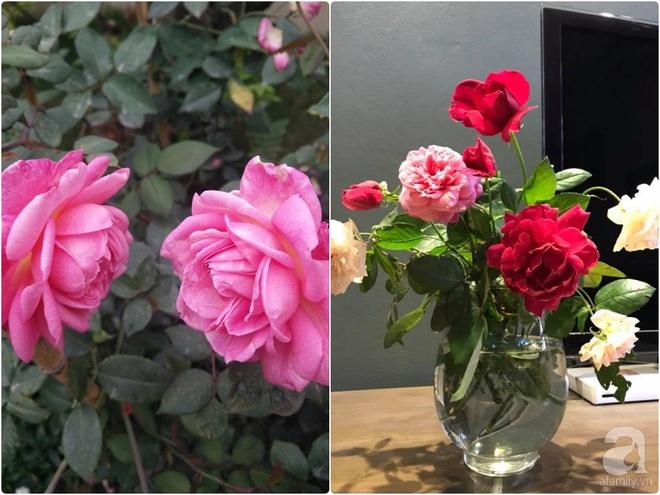Đến thăm khu vườn hồng rực rỡ của người phụ nữ yêu hoa đất Hải Dương - Ảnh 10.