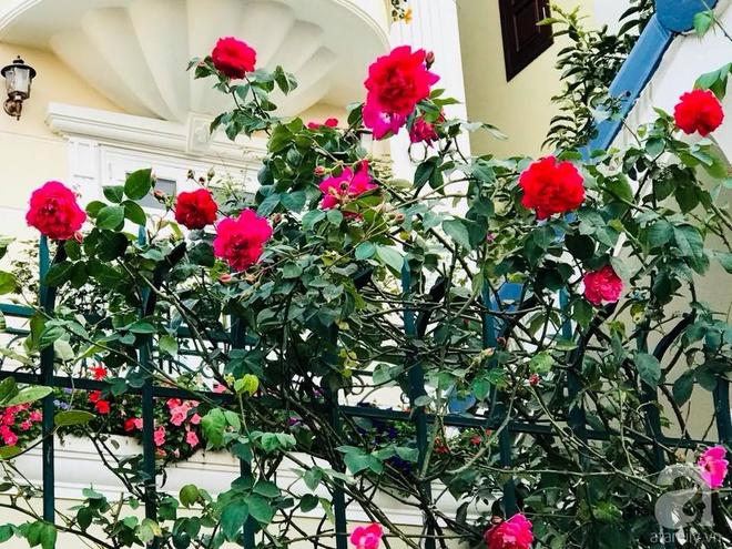 Đến thăm khu vườn hồng rực rỡ của người phụ nữ yêu hoa đất Hải Dương - Ảnh 11.