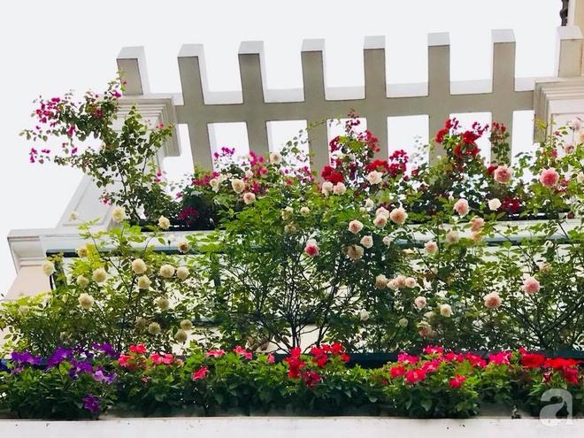 Đến thăm khu vườn hồng rực rỡ của người phụ nữ yêu hoa đất Hải Dương - Ảnh 13.