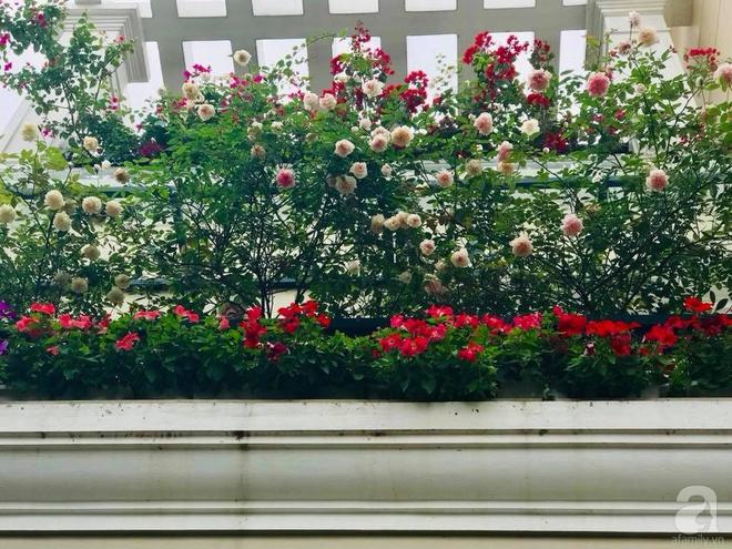 Đến thăm khu vườn hồng rực rỡ của người phụ nữ yêu hoa đất Hải Dương - Ảnh 14.