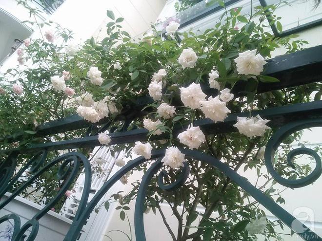 Đến thăm khu vườn hồng rực rỡ của người phụ nữ yêu hoa đất Hải Dương - Ảnh 15.