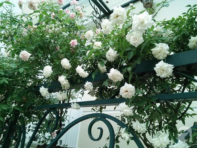 Đến thăm khu vườn hồng rực rỡ của người phụ nữ yêu hoa đất Hải Dương - Ảnh 16.