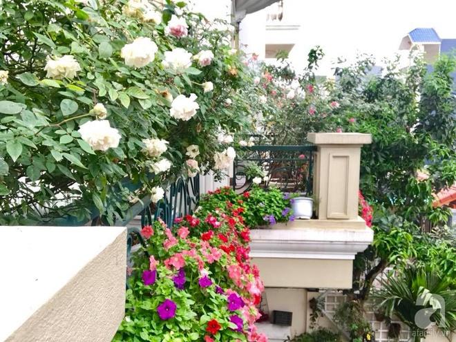 Đến thăm khu vườn hồng rực rỡ của người phụ nữ yêu hoa đất Hải Dương - Ảnh 17.