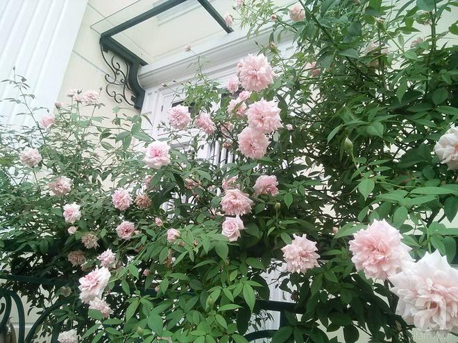 Đến thăm khu vườn hồng rực rỡ của người phụ nữ yêu hoa đất Hải Dương - Ảnh 19.