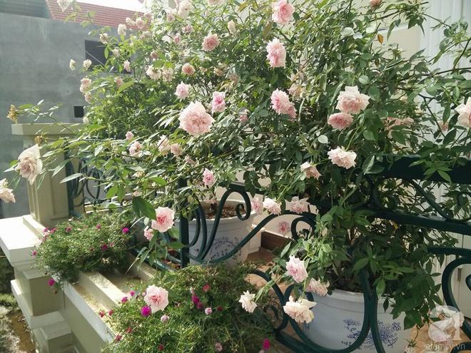 Đến thăm khu vườn hồng rực rỡ của người phụ nữ yêu hoa đất Hải Dương - Ảnh 21.